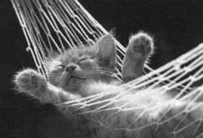 relaxed_kitten